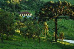 Bento Gonçalves, Rio Grande do Sul