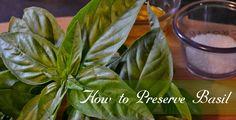 How Preserve Fresh Basil