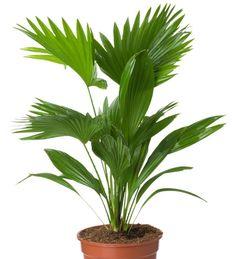 De jolies fleurs et des feuilles contribuent à créer une impression de bien-être dans votre intérieur. Suivez nos conseils d'entretien pour des plantes en bon état.