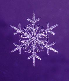 Snowflake ●● #purple #pourpre #photography #picture #photo #photographie #lavender #violet #viola || Follow http://www.pinterest.com/lcottereau/just-purple/