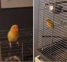 Parrot, Animals, Instagram, Parrot Bird, Animales, Animaux, Animal, Animais, Parrots