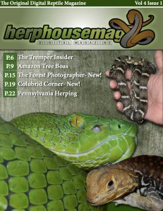 HerpHousemag Vol. House And Home Magazine, Amphibians, Digital, Combat Boots