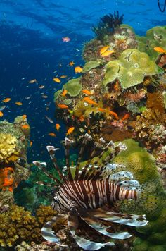 Great Barrier Reef, Australia  ---  For more UNESCO World Heritage Sites http://www.ecstasycoffee.com/look-beautiful-unesco-world-heritage-sites/