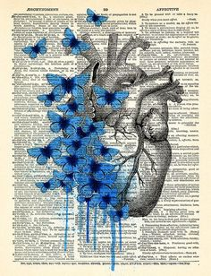 Heart Human Anatomy Butterfly Anatomical Heart by PrintsVariete