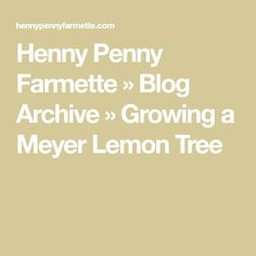 Henny Penny Farmette  » Blog Archive   » Growing a Meyer Lemon Tree#archive #blog #farmette #growing #henny #lemon #meyer #penny #tree Sewage Treatment, Water Treatment, Citrus Trees, Fruit Trees, Meyer Lemon Tree, Henny Penny, Diy Projects For Beginners, Chicken Feed, Skin Care Tips