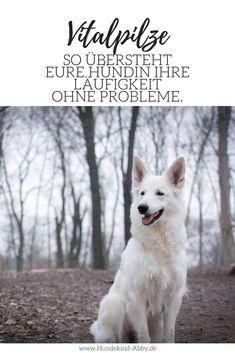 #Hund #Hunhdeblogger #Hundeliebe #Wissen #Fotografie Hunde || Erziehung   || DIY || Wissen || Gesundheit || Vitalpilze || Der Langzeittest || Husky, Dogs, Animals, Fitness, Dog T Shirts, Pets, Alternative Medicine, Dog Food, Animales