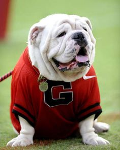 Georgia Bulldog......nothing better!!!!  well except for Coach Richt!!!!