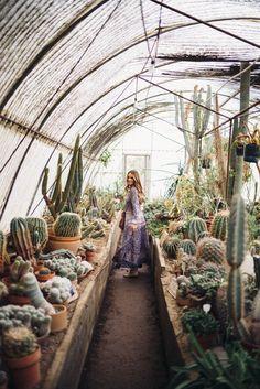 // Moorten Botanical Garden