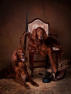 Favorites | Two Irish setters with their trophy