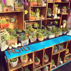Creative Ways To Wall Display House Plants With Cactus - TopDesignIdeas Vendor Displays, Craft Booth Displays, Market Displays, Succulent Wall, Succulent Gardening, Succulents Garden, Succulent Arrangements, Farmers Market Display, Stand Feria