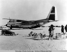 When Pearl Harbor was attacked on December 7, 1941, the United States inventory of military working dogs consisted of only 90 Siberian Huskies and Malamutes. These dogs were used as pack and sled dogs for rescue in areas of the world where motorized equipment could not go . They paved the way for our modern military working dogs and heroes today !   From ... The Dogington Post