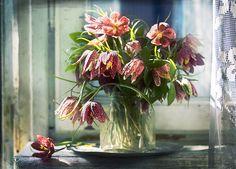 #still #life #photography • photo: весна на подоконнике ) | photographer: юля плетінка | WWW.PHOTODOM.COM