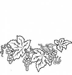 grape, grapes, vine, grapevine, fruit, lineart, illustration
