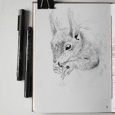 Squirrel drawing in my sketchbook #fabercastell #fabercastellpitt #sketchbook #sketchbookartist #squirrel #animalart #animalartists  #wildlifeartist #katerinakart #art_we_inspire