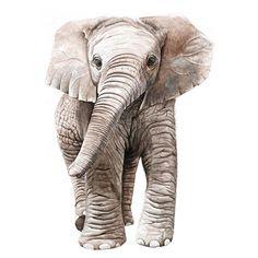 Elefant Watercolor