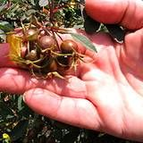 Edible and Medicinal benefits of Rose Hip's plus a few recipes for medicinal herbal teas that use rose hips.