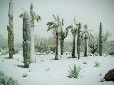 Snow in the Desert!  So very pretty