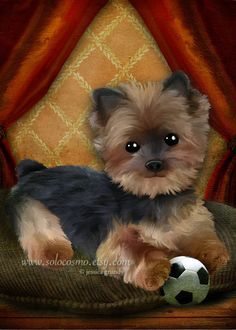 ACEO ATC Artists LIttle Yorkie Puppy Dog by solocosmo