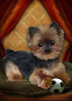 LIttle Yorkie Puppy Dog