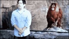 Orangutan Copies Man. Monkey see, monkey do.. zoos, Monkeys, gif, copy, orangutan, apes
