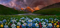 ***Full Bloom (Mt Sneffels, Colorado) by Bsam / 500px