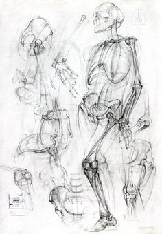 Exceptional Drawing The Human Figure Ideas. Staggering Drawing The Human Figure Ideas. Human Figure Drawing, Figure Drawing Reference, Anatomy Reference, Life Drawing, Pose Reference, Human Skeleton Anatomy, Human Anatomy Drawing, Academic Drawing, Drawing Studies