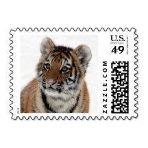 Tiger_2015_0114 Postage Stamps