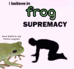 Kermit, Videos Kawaii, Dankest Memes, Funny Memes, Frog Pictures, Hilario, Cute Frogs, Free Therapy, Cry For Help