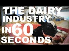 ▶ The Dairy Industry in 60 Seconds Flat - YouTube