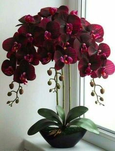 Real Touch Orchid - home decor plants - Orchideen Unusual Flowers, Beautiful Rose Flowers, Amazing Flowers, Orchid Plant Care, Orchid Plants, Orchid Flowers, Orchid Flower Arrangements, Creative Flower Arrangements, Orchids Garden