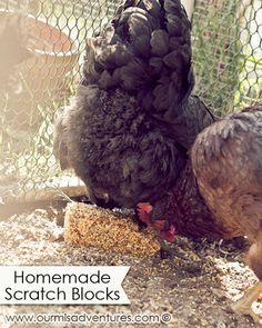 Homemade Scratch Blocks >> a cheaper alternative to Purina's Flock Blocks #chickens