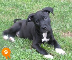 """Help Cherokee County Animal Shelter win this contest! Please """"like"""" and """"pin it."""" Stark, adopted from Cherokee County Animal Shelter – Canton, GA: """"Stark playing outside and enjoying the sun. Funny Dogs, Cute Dogs, Awesome Dogs, Baby Animals, Cute Animals, Cheap Pets, Enjoying The Sun, Animal Shelter, Dog Life"""