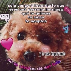 memes con olor a eo. Love Memes, Funny Memes, Romantic Memes, Find Real Love, Positive Phrases, I Love You Baby, Love Phrases, Meme Faces, Cute Images