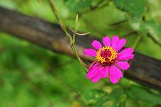 Pink Flower :)