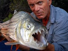 Extreme angler Jeremy Wade uncovers the world's largest, strangest and most dangerous fish in RIVER MONSTERS. Jeremy Wade, John Wade, Monstre Du Loch Ness, Dangerous Fish, Dangerous Animals, African Tiger, Tiger Fish, Wading River, Pisces