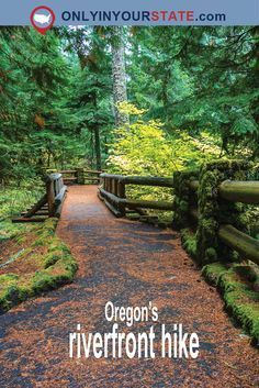 Travel | Oregon | River | River Trail | Waterfront | Hiking | Unique Activities | Exploring | Outdoor | Adventure | Fitness | Wellness | Forest