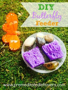 DIY Butterfly Feeder - How to make a DIY butterfly feeder using water, sugar, and a few other household items and attract butterflies to your garden.