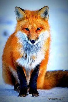 un renard dans un paysage d'hiver