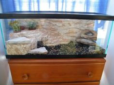 DIY fake rock with plant cutouts for the gecko
