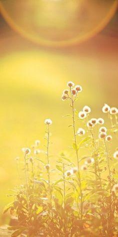 -BLEN Paradise garden- #yellow ☮k☮