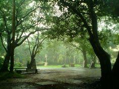 Rainy day. Outside the Maharaja's College in Kochi , Kerala India.