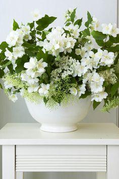 Beautiful, Green & white.