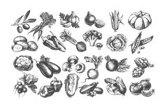 Set of hand drawn vector vintage vegetables sketches with a 50% discount! This…
