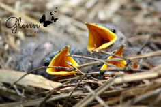 Glenn Studios:  Glenn Photography Birds in my grill :/ Newburgh, Indiana