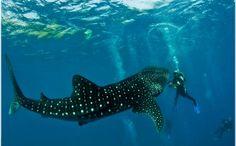 Scuba+Diving+Philippines | Scuba Diving Vacation in Cebu City, Philippines | Trip To Philippines