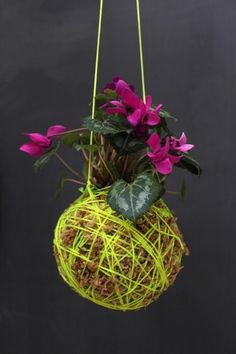 hanging moss ball plants, use as outdoor planters under patio Love Garden, Garden Pots, Garden Ideas, String Garden, Moss Plant, Hanging Planters, Hanging Gardens, Outdoor Planters, Container Flowers