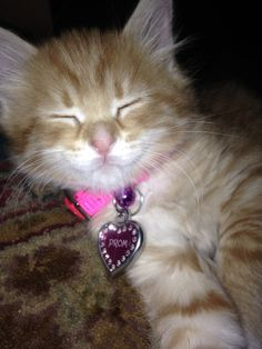 Most adorable promposal with a kitten!