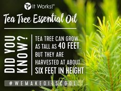 Did you know?! #WeMakeOilsCool
