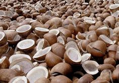 We are one of the distinguished Coconut Copra Manufacturers .Our range of  Copra is derived from sun dried  coconuts,thus ensuring high quality products. Dried Coconut  is rich in protein content thus widely used in various culinary purposes.  To know more about our export products visit our website in the below given URL http://farm2stores.com