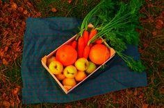 Jesienne warzywa i niesamowite wrażenia